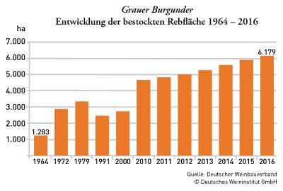 Entwicklung Grauburgunder