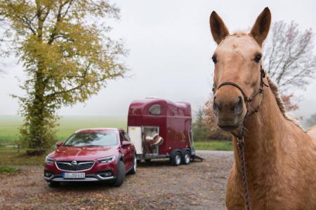 Edles Gespann: Dank Opel Exclusive fährt der Insignia Country Tourer Ton in Ton mit dem Pferdeanhänger vor