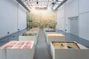 Uriel Orlow, »Soil Affinities«, 2018, Installation aus verschiedenen Medien © Uriel Orlow