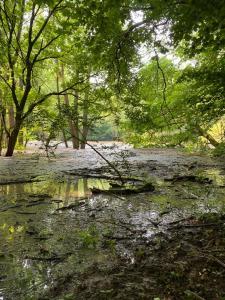 Der Hainich hat auch ungezähmte Seiten.Wie es sich gehört für einen Urwald mitten in Deutschland.