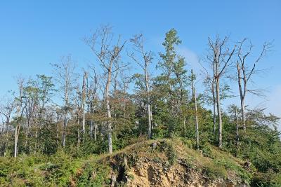 Welche Baumarten soll ich angesichts des Klimawandels in meinem Wald pflanzen? (Foto: FVA/Weidner)