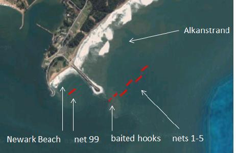 Die sechs Hainetze vor Richards Bay für 60 Prozent aller Todesfälle unter den Bleifarbenen Delfinen in KwaZulu-Natal verantwortlich.