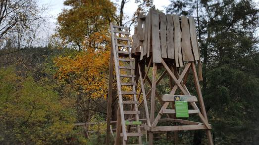 Ein neuer Aussichtsturm erlaubt den Blick in die Krone eines Tulpenbaumes. Der Baum aus Nordamerika wächst im WeltWald Harz bei Bad Grund und behält sein buntes Laub bis Ende November © Landesforsten
