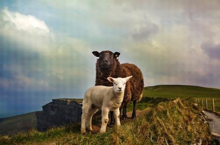 AIFS Auslandsaufenthalte in Irland
