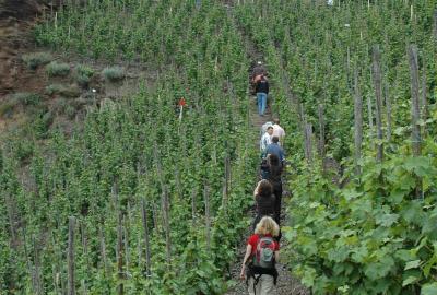 Bundesweites WeinWanderWochenende