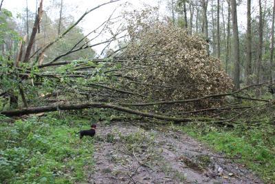 Sturmtief - Gefahr durch abbrechende Äste und umstürzende Bäume