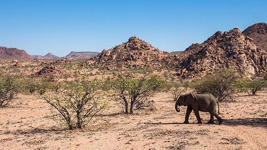 Namibia_Damaraland_Wildelefanten