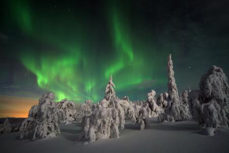 Nordlicht über den schneebedeckten Wipfeln © Visit Finland