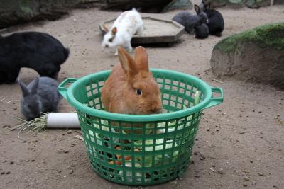 Kaninchen im Futterkorb. Foto: Wildpark-MV