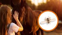 Achtung Hirschlausfliege: So schützt du deinen Hund und dein Pferd