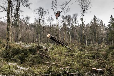 """Ein spezieller """"Baumlift"""" transportiert Fichten bodenschonend aus dem Moor. Die Landesforsten setzen in schwierigem Gelände oder auf empfindlichen Böden Hochgebirgs-Seilkrantechnik ein, um Bäume zu bergen / Foto: Gasparini / Landesforsten"""