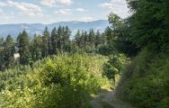 Wie sehen Waldbesuchende die Baumarten im Freiburger Wald? / Foto ©FVA