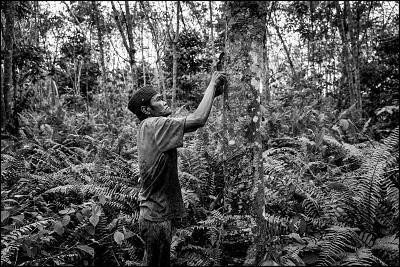 Mit beeindruckenden Aufnahmen illustriert der Fotograf und Schriftsteller Alessandro Scotti seine Reise zu Naturkautschuk-Bauern