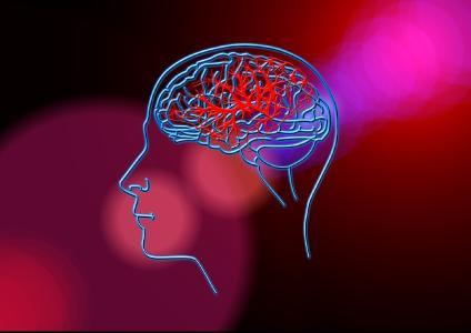 Gehirn / Foto: pixabay