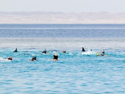 Touristen schwimmen auf ruhende Delfine zu / Foto: M.Fumagalli/HEPCA