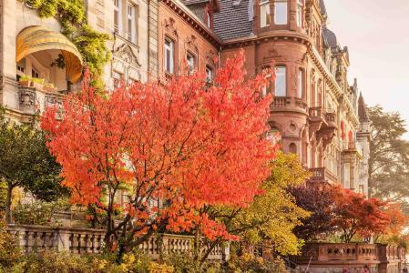Konstanz Seestrasse Baum, Bildnachweis MTK Dagmar Schwelle