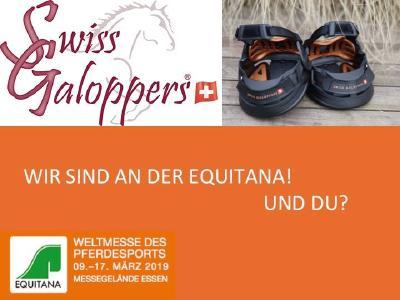 Swiss Galoppers in wenigen Tagen in Essen