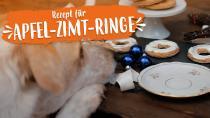 Apfel-Zimt-Ringe für deinen Hund