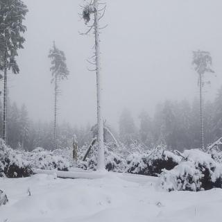 Schadensschwerpunkte im Harz und Solling