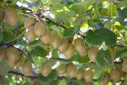Arbeiten auf einer Obst- oder Gemüse-Farm während des Sabbatjahres