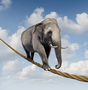 Elefant auf hochseil freshidea / Fotolia