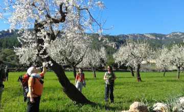 Aktivurlauber genießen den Duft von Millionen Mandelbäumen um Tal von Sóller