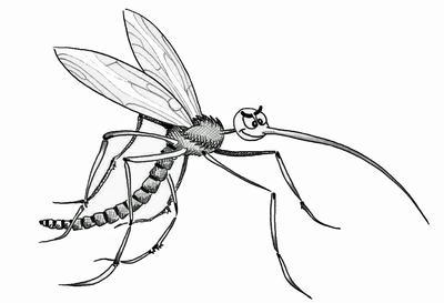 m ckenplage brennnessel ausz ge helfen bei insektenstichen weleda ag pressemitteilung. Black Bedroom Furniture Sets. Home Design Ideas