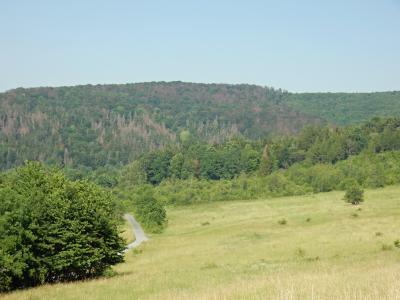 Der Klimawandel hat den Bäumen in steileren Lagen des Nationalparks stark zugesetzt, hier der Burgberg auf des Westseite des Nationalparks am 26.06.2019 / Foto: Nationalparkverwaltung