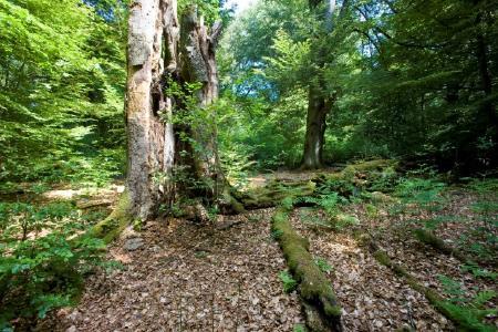 Die Urwälder von morgen - Landesforsten weiten ihr Naturwaldkonzept aus