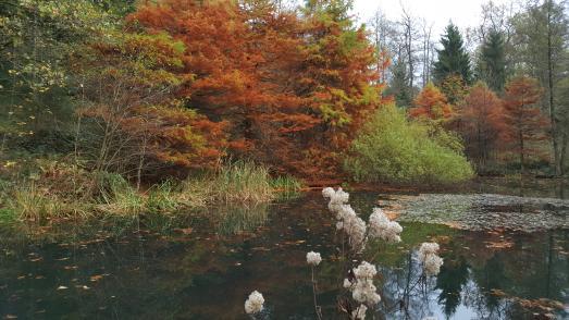 Auf Augenhöhe mit dem Tulpenbaum im WeltWald Harz © Landesforsten