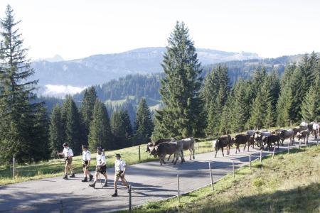 Viehscheid in den Allgäuer Hörnerdörfern