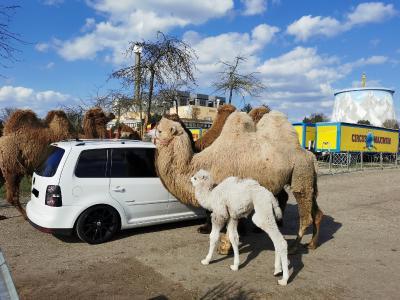Safariland Drive-In Circus Maximum - Wunderland Kalkar