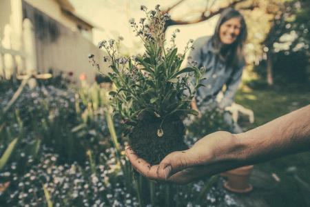 Steigende Temperaturen, mehr Sonnenschein und Freude am Pflanzen locken zu dieser Jahreszeit wieder viele in den Garten. / Bild: AGR