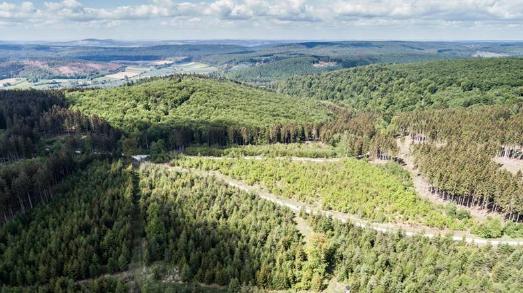 Luftaufnahme aus dem Solling: Noch junger, vielfältig gemischter, klimastabiler Wald auf durch den Sturm Kyrill 2007 geschädigten Flächen; Foto: Niedersächsische Landesforsten