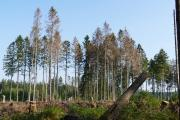 Schäden durch Sturm, Dürre und Borkenkäfer im Harz, Foto: NLF