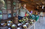 Kernobstspezialist Konrad Hauser präsentiert Obst-Raritäten vom Bodensee. Copyright Pfahlbaumuseum Unteruhldingen, einmaliger Abdruck frei