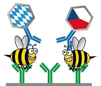 Wissenschaftler aus Regensburg, Brünn und Prag arbeiten gemeinsam und grenzüberschreitend daran, die Ausbreitung von Bienenkrankheiten zu verhindern / Illustration: obx-news/Universität Regensburg/Matthias Mickert