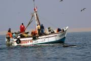 Fischerboot und Delfin in der Paracas-Bucht, Peru, © acorema