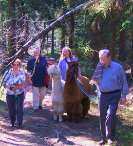 """Auf Ostbayerns größter Alpaka-Farm im Bayerischen Wald begeistern die südamerikanischen """"Kuscheltiere"""" Touristen und Einheimische. Außerdem helfen sie bei der Behandlung behinderter Kinder. Foto: obx-news"""