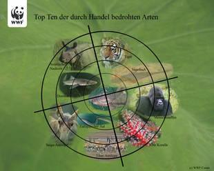 Die Top Ten der durch internationalen Handel besonders bedrohten Tiere