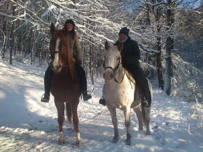 Der Swiss Galoppers im Wintereinsatz bei Margit Schönenberg vom HufschuhMobil.