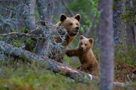Kleiner und Mama Bär