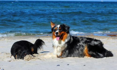 Ferien mit Hund: Perfekt vorbereitet für den Urlaub mit dem Vierbeiner
