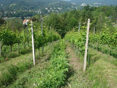 Baden Baden Eckberg im Sommer 2012.