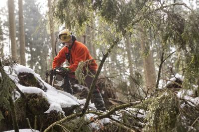 Sturmtief Eberhardt - Landesforsten warnen vor Betreten der Wälder