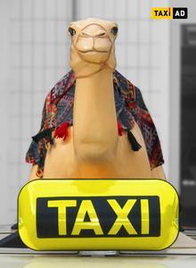 Dieses Kamel will nur werben Jordanienkampagne von Taxi-AD