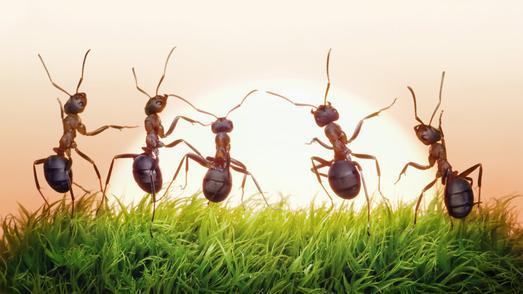Ameisen geben der Wissenschaft noch viele Rätsel auf. Eines ist jetzt dank der Forschung Regensburger Zoologen gelöst: Wo Ameisen ihre Toiletten anlegen. Foto: obx-news