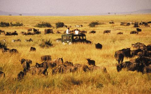 """Foto-Safari inmitten der """"Großen Wanderung"""""""