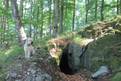 Zufluchtsort Wildholl-Loch – eine kleine Basalthöhle im Vogelsberg wurde als Naturdenkmal ausgewiesen, Foto: Susanne Jost