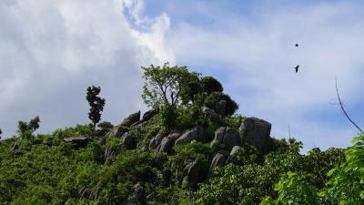 Meilenstein: World Vision und Ecosia kooperieren